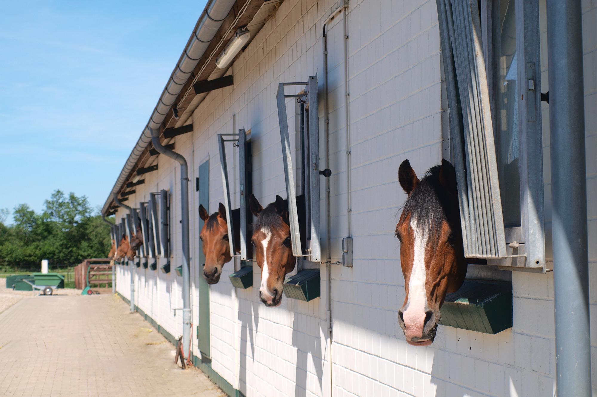 Pferdeboxen von Außen im Radesforder Hof